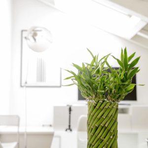 竹の鉢との調和