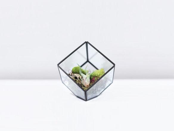 GREEN ユニークドーム プラントセットのメイン画像